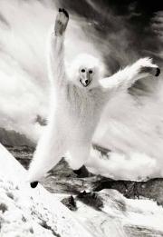 1_Thomas-Stefan-starring-as-bear-Tirol-2007-©-Esther-Haase